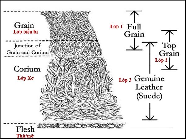 cấu trúc các lớp của da thật